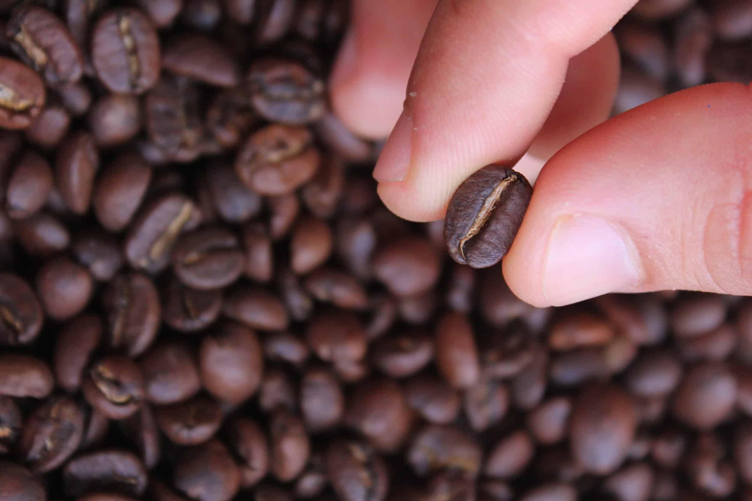 torrefazione del caffè